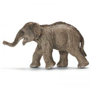 Zvieratko - mláďa Slona azíjského